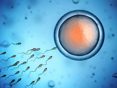 TCM und IVF und ICSI bei Kinderwunsch in München - Akupunktur Wann K Nstliche Befruchtung on
